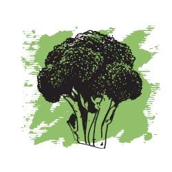 Брокколи масло экологически чистое нераф. 15 мл