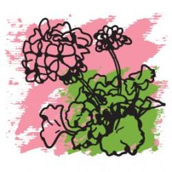 Эфирное масло Герань розовая 5 мл, органик