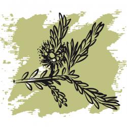 Эфирное масло Чайное дерево 50 мл, органик