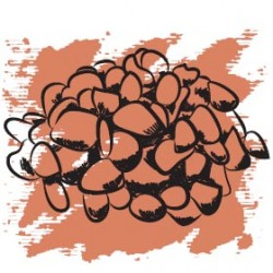 Эфирное масло Мирра 5 мл, органик